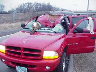 deer-crash