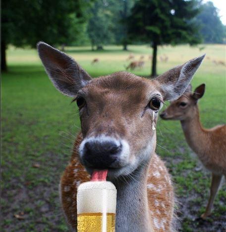 deer-beer